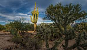new homes in arizona phoenix u0026 tucson u2013 maracay homes