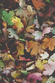 Fall Autumn by 248 Best Autumn Leaves Images On Pinterest Autumn Fall Autumn