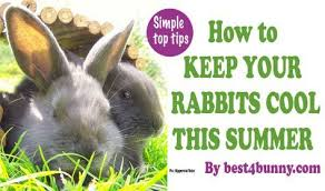 Cool Pets Rabbit Hutch Cooper And Scarlett Need Some Summer Digs For Ann Arbor It Would