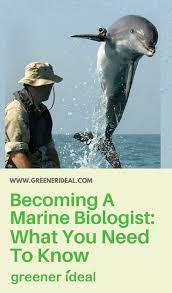 best 25 marine biology careers ideas on pinterest marine