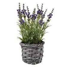 the best indoor plants indoor plants our pick of the best ideal home