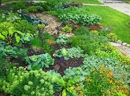 drought garden secrets soil mulch and water shawna coronado