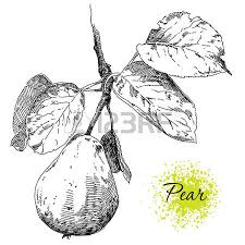 beauty hand drawing apple on apple tree branch royalty free
