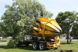 conduct safe tree removal afriscoop