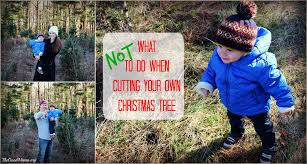 what not to do when cutting your own christmas tree the good mama