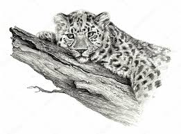 pencil sketch leopard lying on the tree isolated on white