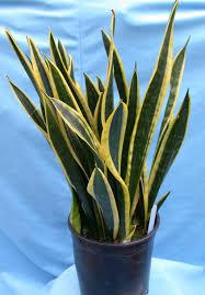 indoor plants miami best 25 indoor tropical plants ideas on