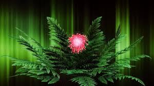 flower green night flowers nature blossom fern flower wallpapers