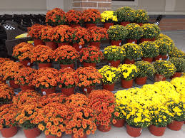 autumn flower box ideas flower box ideas using some old boxes