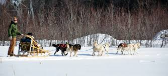 file dog sled quebec 2010 jpg wikimedia commons