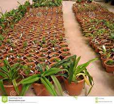 sale of small plants in pots in a green house stock photography
