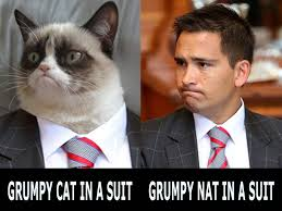 Cat Suit Meme - grumpy cat in a suit politically corrected nz