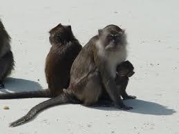 koh phi phi island monkey beach koh phi phi island pinterest