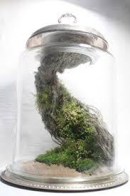 how gravity defying vertical terrarium houseplants
