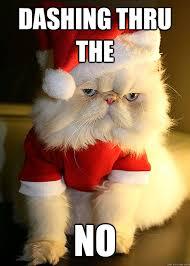 Angry Cat Meme No - dashing thru the no angry cat quickmeme