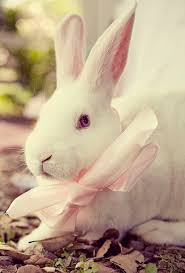 1352 best bunnies images on pinterest animals bunny rabbits and