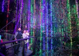 atlanta botanical garden lights garden lights holiday nights makes the holidays bright