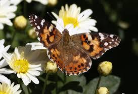 70 mile wave of butterflies lights up denver weather radar