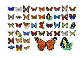 42 butterfly machine embroidery designs butterfly applique