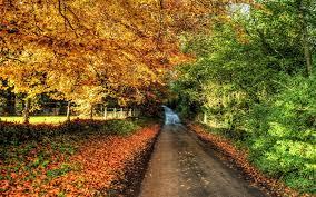 path through autumn nature wallpaper nature wallpapers 36780