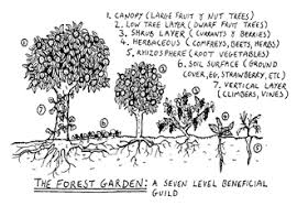 this sketch of a forest garden is from u003ca href u003d