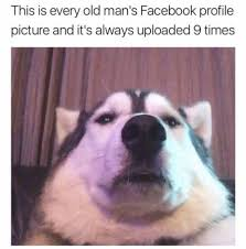 Best Doge Memes - awesome 24 best doge memes wallpaper site wallpaper site
