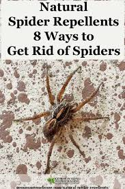 Best Way To Get Rid Of Mosquitoes In Your Backyard Natural Spider Repellents 8 Ways To Get Rid Of Spiders
