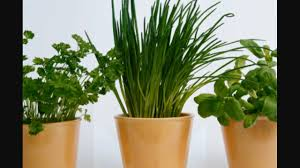 growing herbs for beginners module 1 history of herbs youtube