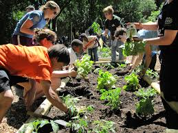 How To Plant Vegetables In A Garden by Let U0027s Hear It For Youth Gardens Plant Talk