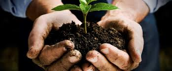 gardening cals cooperative extension
