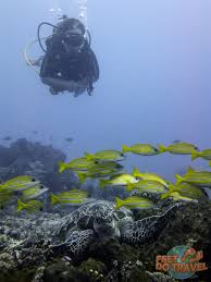 scuba diving the gili islands feetdotravel
