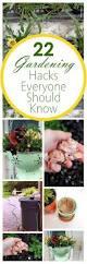 gardening home garden hacks tips and tricks growing plants best