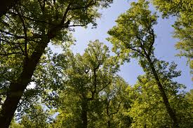free images tree nature branch sky meadow sunlight leaf