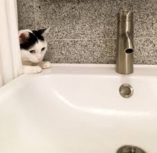 Cat Under Faucet How I Installed An Ikea Bathroom Vanity U2013 Project Palermo