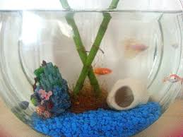 Goldfish Bowl Vase Betta Fish Goldfish And Bamboo Oh My Crafts A La Mode