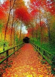 autumn colors our beautiful planet pinterest autumn colours