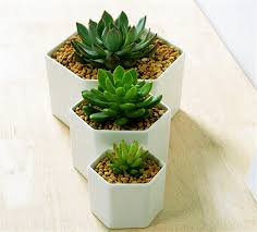 small planter great idea for small plants simple hexagon ceramic flower pot white