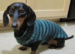 216 best knit for pets images on pinterest dog sweater pattern