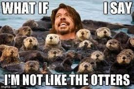 Foo Fighters Meme - foo fighters meme musics so funny pinterest foo fighters