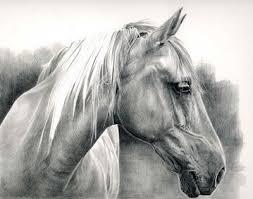 105 best head study horse art images on pinterest horses
