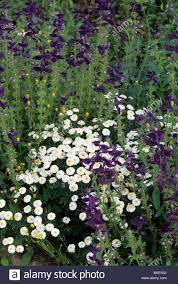Kitchen Herb by White Wonder