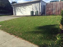 Florida Backyard Landscape Ideas Synthetic Lawn Stanford California Home And Garden Front Yard