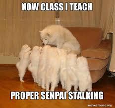 Senpai Meme - now class i teach proper senpai stalking storytelling dog make a