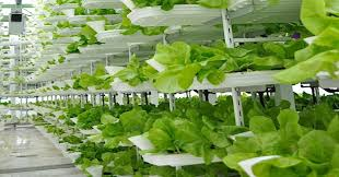 vertical farming a new area for investors u2014commentary