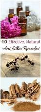 Natural Ant Killer For Kitchen by Ant Killer Remedies Natural Ways To Repel Ants Effectively