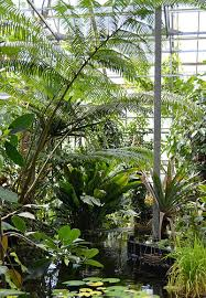 Tropical Climbing Plant - holland utrecht u2013 botanic gardens the good the fab and the lovely