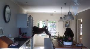 baboons in south africa invade house ransack the place video