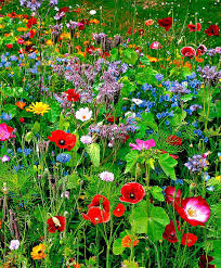 280 best beautiful nature flowers images on pinterest beautiful