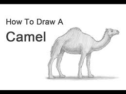how to draw a camel youtube