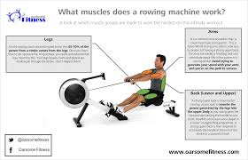 what muscles do a rowing machine work oarsome fitness